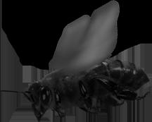 Lecąca pszczoła