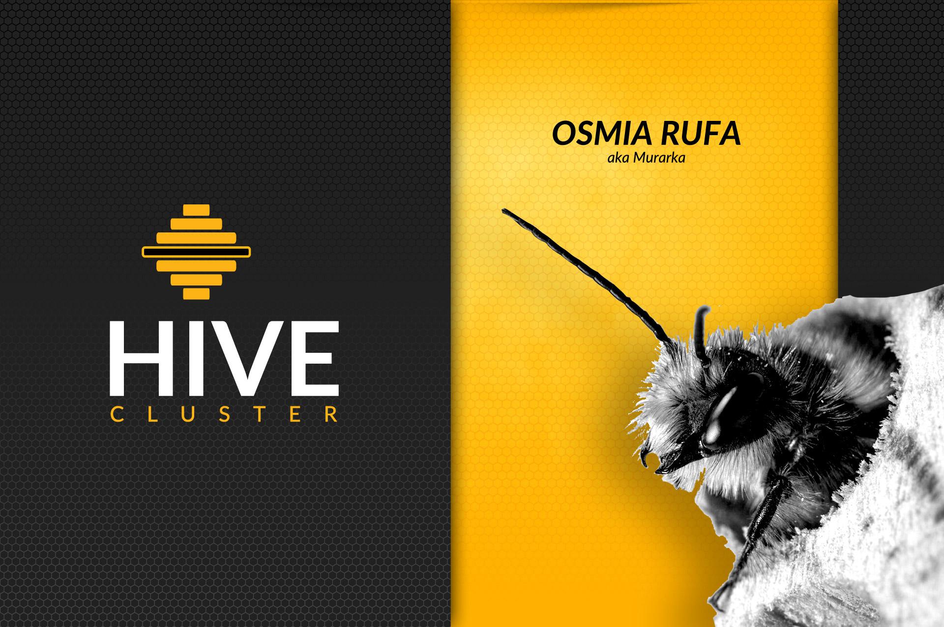 osmia rufa - murarka hive cluster